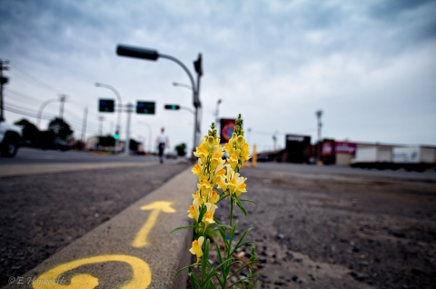 Urban_Flowers_(4710820834).jpg